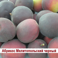 abrikos-militopolskijj-chernyjj